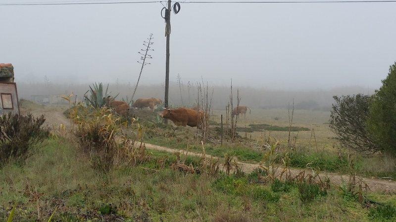 Im Februar nicht ungewöhnlich. Nebel am Morgen.