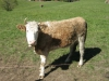 wanderung_diemtigtal-seebergsee-20091007_5955