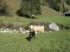 wanderung_diemtigtal-seebergsee-20091007_5992