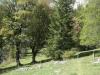 wanderung_diemtigtal-seebergsee-20091007_6008