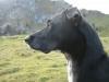 wanderung_diemtigtal-seebergsee-20091007_6084