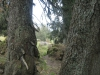 wanderung_diemtigtal-seebergsee-20091007_6112