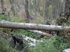 wanderung_diemtigtal-seebergsee-20091007_6128