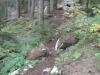 wanderung_diemtigtal-seebergsee-20091007_6131