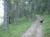 wanderung-feldberg-zur-zastler-huette-20081018_0683