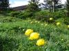 Wanderung-Grindelwald_04062011_230