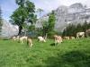 Wanderung-Grindelwald_04062011_238