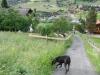 Wanderung-Grindelwald_04062011_256