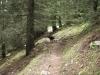 wanderung-gurnigel-gantrisch_0431