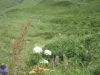 wanderung-oberalppass-tomasee_30072009_3759