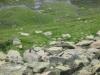 wanderung-oberalppass-tomasee_30072009_3826