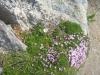 wanderung-oberalppass-tomasee_30072009_3875