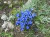 wanderung-oberalppass-tomasee_30072009_3885