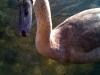 am-rhein-im-august-200922