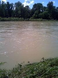 Hier geht die Post ab - Hochwasser im Rhein in der Nähe von Basel