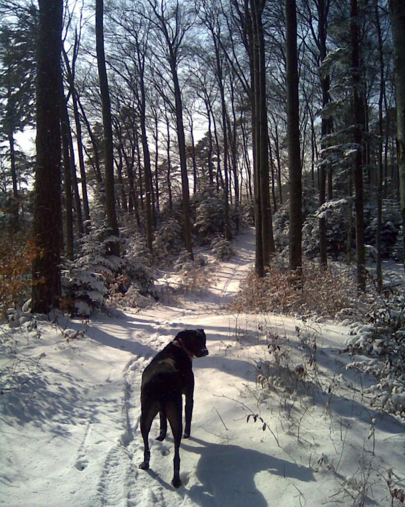 Wanderung Blauen Winter 30