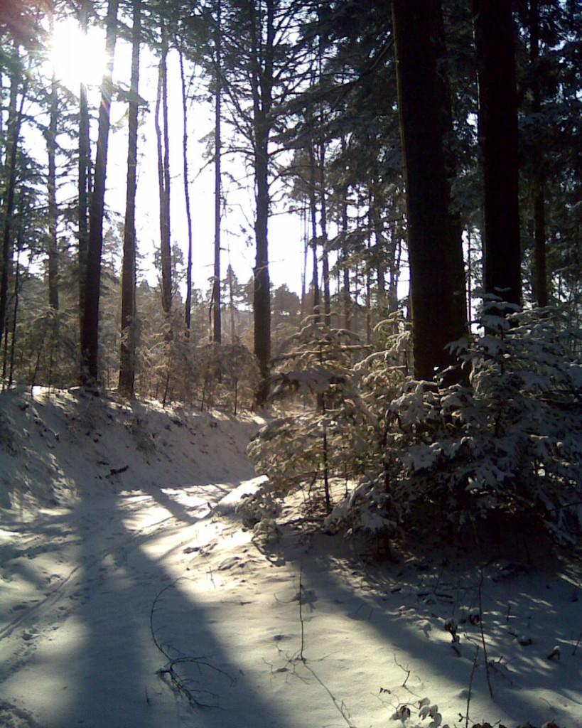 Wanderung Blauen Winter 44