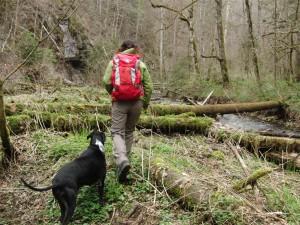 über den Baumstamm zurück auf den richtigen Weg