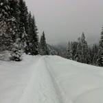 Gespurter Weg auf dem Springenboden, Diemtigtal, Berner Oberland.