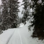 Gespurter Weg durch den verschneiten Wald im Springenboden, Diemtigtal, Berner Oberland