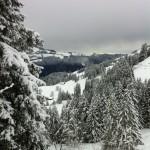 Schöner Ausblick über verschneite Tannen - Springenboden, Diemtigtal, Berner Oberland.