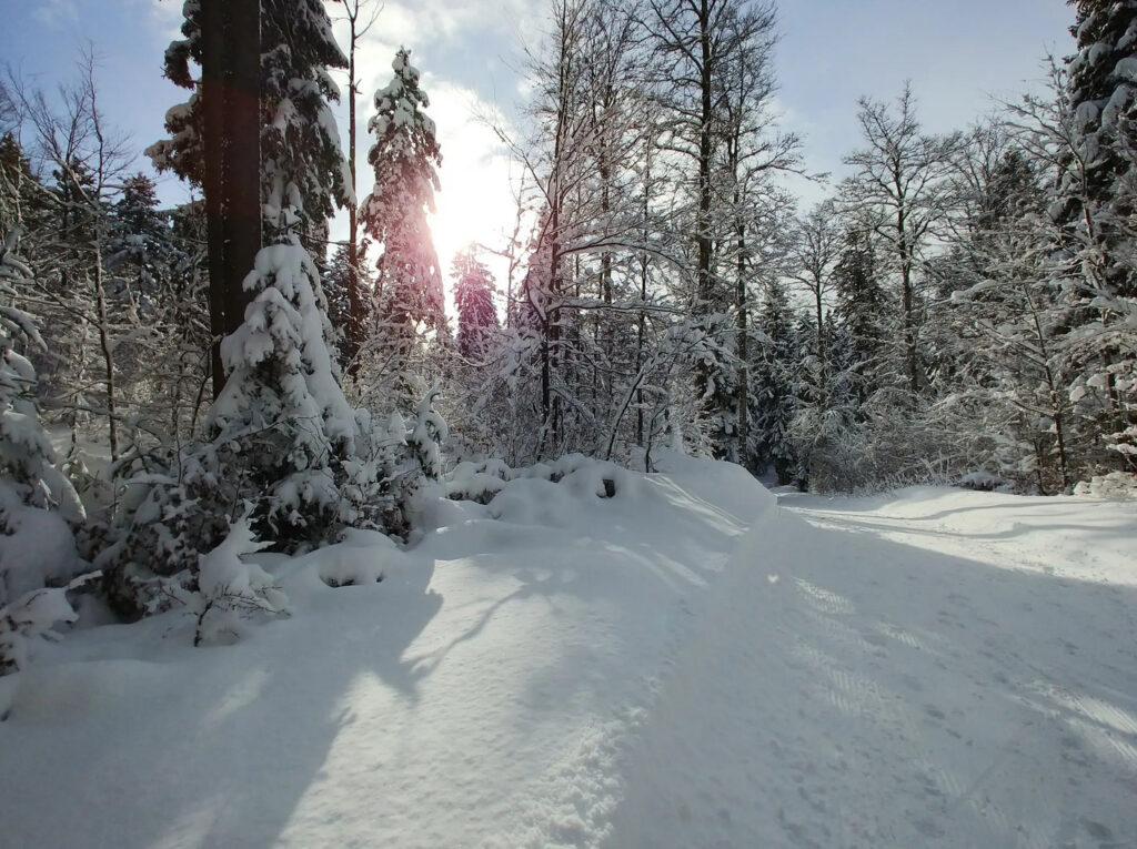 jura hoehenweg winterwanderweg bei saint george